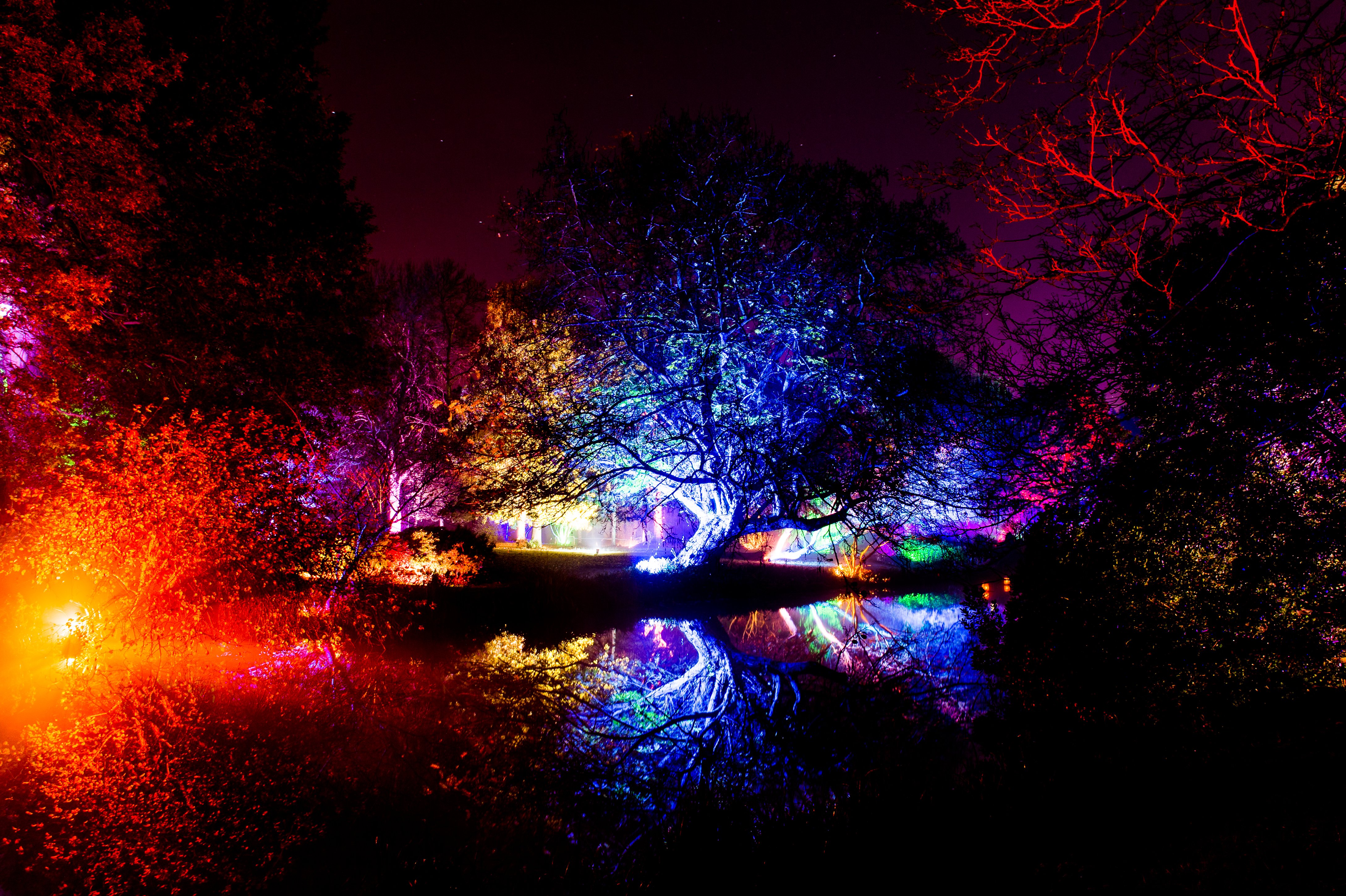 Trees lit up in a woodland